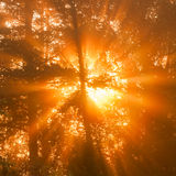 Sunbeams through tree in morning fog  details Royalty Free Stock Photos