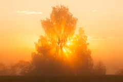 Sunbeams through tree in morning fog Stock Images