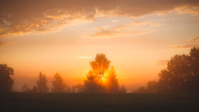 Sunbeams through tree in morning fog Stock Photography