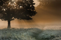 Sunbeams through tree onto foggy landscape Royalty Free Stock Photography