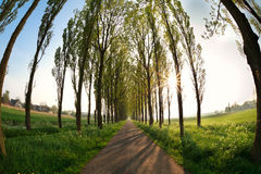 Sunbeams through tree rows over bike road Stock Photography