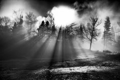 Sunbeams Through Trees. Beams of light shining through a bank of trees as the sun rises Royalty Free Stock Images