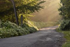 Sunbeams Through the Trees on a Country Road Stock Photography