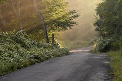 Sunbeams Through the Trees on a Country Road Stock Image
