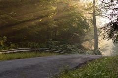 Sunbeams Through the Trees on a Country Road Royalty Free Stock Photos