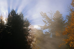 Sunbeams, Trees, and Fog Stock Photos