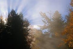Sunbeams, Trees, and Fog Stock Photos