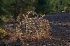 Sunbeams between trees - illuminate a dry branch royalty free stock photos