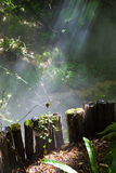 Sunbeams trough a mistycal forest Royalty Free Stock Photography