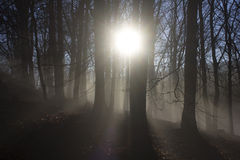 Sunbeams trough tree branches Stock Image