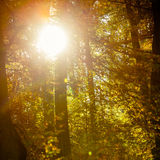 Sunbeams trough trees in park Stock Image