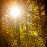 Sunbeams trough trees in park Stock Image