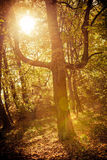 Sunbeams trough trees in park Stock Photos