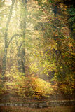 Sunbeams trough trees in park Royalty Free Stock Photography