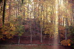 Sunbeams trough trees in park Royalty Free Stock Photos