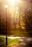Sunbeams trough trees in park Royalty Free Stock Image