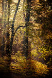 Sunbeams trough trees in park Stock Images