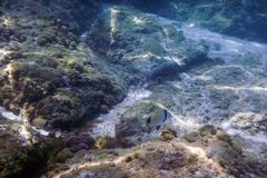 Sunbeams underwater rocks and pebbles on the seabed swimming fis. H Summer Stock Photo