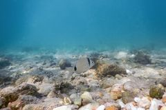 Sunbeams underwater rocks and pebbles on the seabed swimming fis. H Summer Underwater Royalty Free Stock Photo