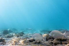 Sunbeams underwater rocks and pebbles on the seabed swimming fis. H Summer Underwater Stock Image