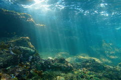 Sunbeams underwater viewed from seabed in a reef. Underwater sunbeams through the water surface viewed from the seabed on a reef of the Caribbean sea, natural Royalty Free Stock Photography