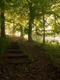 Sunbeams up a wooded path Royalty Free Stock Photos