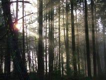 Sunbeams w lesie Fotografia Royalty Free