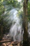 Sunbeams w lesie Obrazy Stock