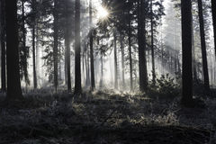 Sunbeams in winter landscape. Sunlight with sunbeams in the morning winter forest with ice and trees stock photos