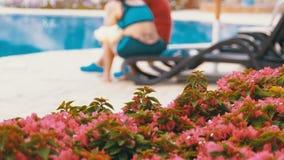 Sunbed lounger blisko basenu z b??kitne wody w kurorcie Egipt zbiory wideo