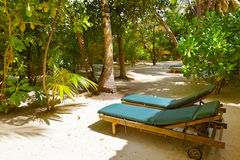 Sunbed on Maldives beach. Nature vacation background Stock Images