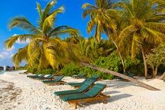 Sunbed on Maldives beach Stock Photography