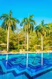 Sunbeds и высокие пальмы на бассейне Стоковое фото RF