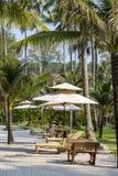 Sunbeds на пляже и пальмах, Таиланде Стоковые Фото