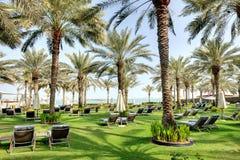 Sunbeds auf dem grünen Rasen und den Palmeschatten stockfoto