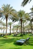 Sunbeds auf dem grünen Rasen und den Palmeschatten im Luxushotel lizenzfreie stockfotografie