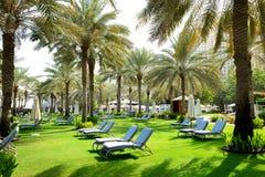 Sunbeds auf dem grünen Rasen und den Palmeschatten im Luxushotel lizenzfreies stockfoto