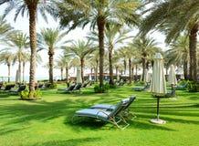 Sunbeds auf dem grünen Rasen und den Palmeschatten im Luxushotel lizenzfreie stockbilder