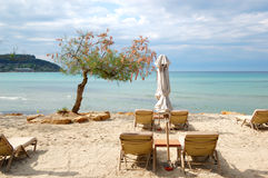 Sunbeds and blooming tree on a beach at the modern luxury hotel. Halkidiki, Greece Stock Photography