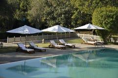 Sunbeds da una piscina in mezzo di pianta fotografia stock