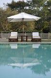 Sunbeds da una piscina in mezzo di pianta immagini stock libere da diritti