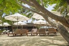Sunbeds in der Palmenwaldung Stockbilder