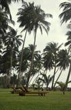 Sunbeds die door Palmen wordt omringd Stock Foto's