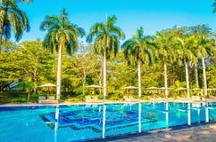 Sunbeds e palmeiras altas na piscina fotografia de stock royalty free