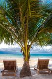 Sunbeds on exotic tropical palm beach Royalty Free Stock Photo