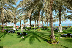 Sunbeds on the green lawn and palm tree shadow in luxury hotel stock photography