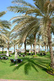 Sunbeds on the green lawn and palm tree shadow in luxury hotel Royalty Free Stock Photography
