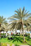 Sunbeds on the green lawn and palm tree shadow in luxury hotel royalty free stock photos