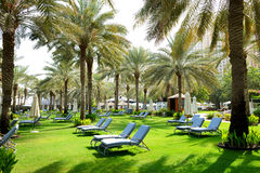 Sunbeds on the green lawn and palm tree shadows in luxury hotel Royalty Free Stock Photo