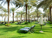 Sunbeds on the green lawn and palm tree shadows in luxury hotel royalty free stock images